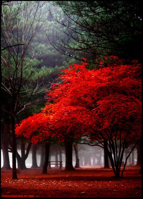 50 Most Beautiful Trees From Around The World Real Photos Beautiful Landscape Photography Beautiful Landscapes Beautiful Tree