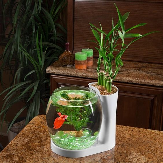 Elive betta bowl and planter buy at for Fish bowl plants