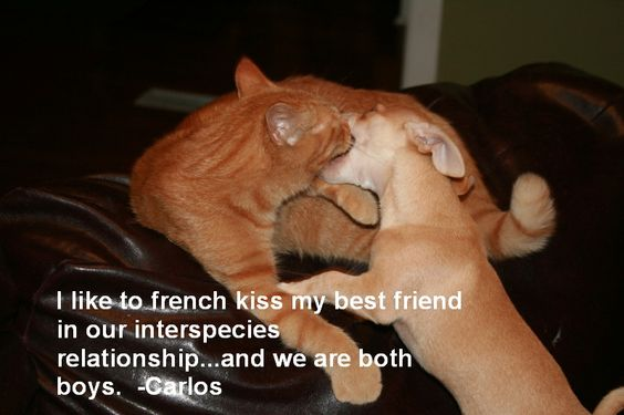 """I like to French Kiss my best friend in our inter-species relationship… and we are both boys."" - Carlos  Carlos the Chihuahua and Huebie the cat love each other very much and are not afraid to show it."
