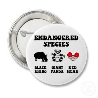 Endangered species: the redhead