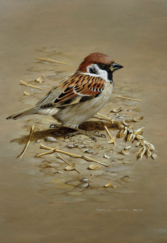 Image: aan #birdart #bird #wildlifeart | Dibujos de aves, Pinturas de ...