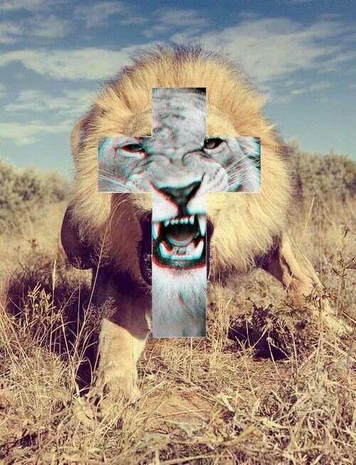 "Animal Edits on Twitter: ""-Porse http://t.co/cny1XAMnqG""-"