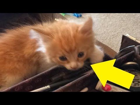When This Stray Kitten Approached A Man Walking His Dog They Couldn T Have Known What Was Coming Youtube Cute Kitten Gif Kittens Kitten Gif