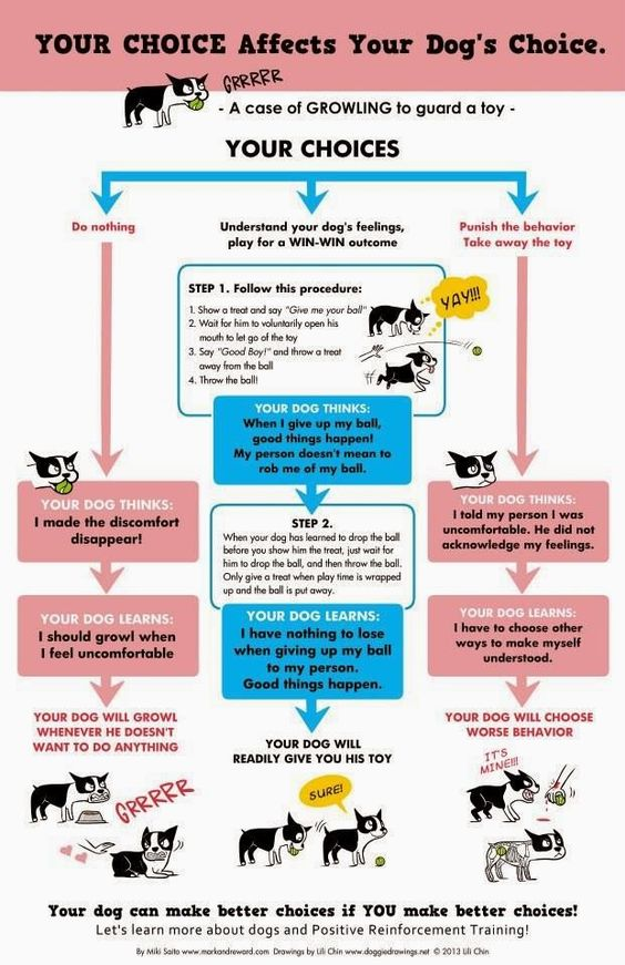 Northeast Boston Terrier Rescue: Your Choices Affect Your Dog