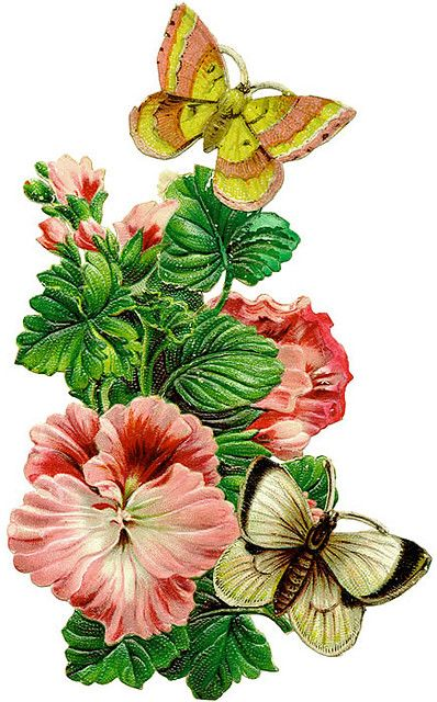 flowers w butterflies: