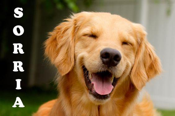 """""""A gargalhada é o sol que varre o inverno do rosto humano."""" - Victor Hugo #frasedodia #sorria #boraserfeliz #presentes #ditudoh"""
