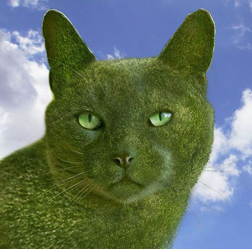 ~ This is The Topiary Cat's profile image which would be his passport photo if he ever travelled abroad! ~ By surrealist artist Richard Saunders.