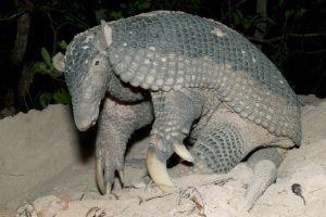 BBC escolhe melhores fotos de animais feitas com câmeras 'ocultas' - Fotos - Meio Ambiente
