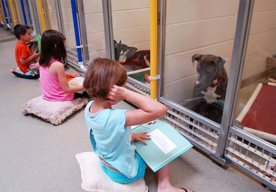 How To Volunteer At An Animal Shelter Shelter Dogs Animal Shelter Dogs
