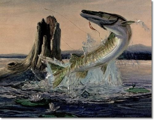 Muskie Fish Drawing muskie cartoon drawing images charles weiss art ...