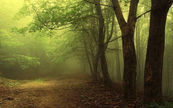 sombre forêt brumeuse Wallpaper