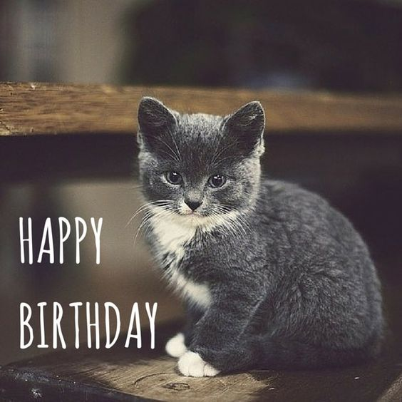 Happy Birthday Card Wishes cute kitty: