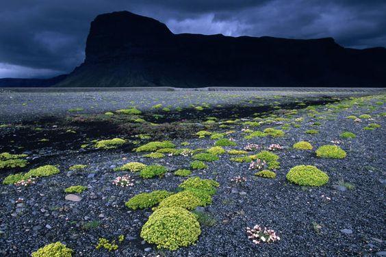 Skeidararsandur (Iceland), with summer wildflowers and Lomagnupur bluff.