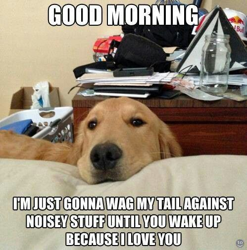 This reminds me of my baby in Cali. Sammy would jump on my bed and just look at me wacking me with his tail like mom wake up i want to play