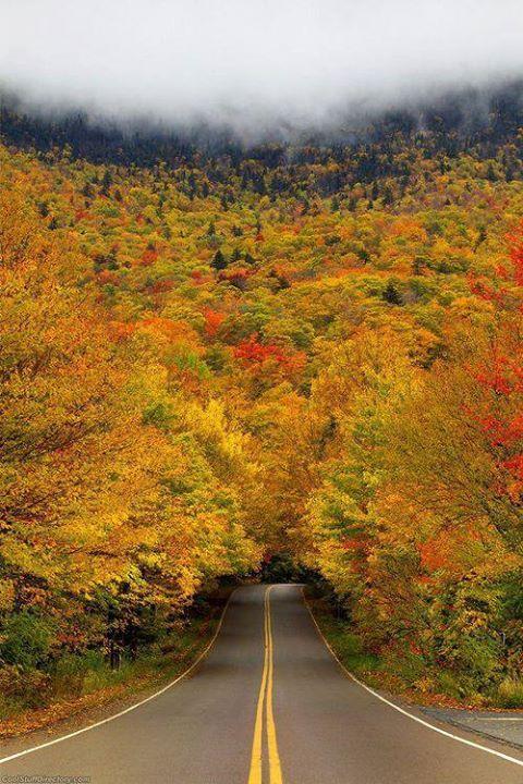 Autumn Tree Tunnel, Smuggler's Notch State Park, Vermont. ~via Green Renaissance, FB