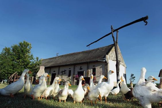 I just love this photo of a typical scenery of Vojvodina countryside, Serbia
