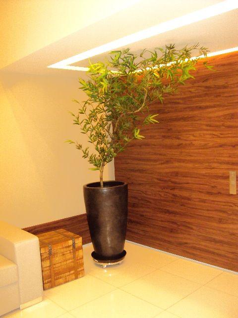 Bambu Mosso Fotos Preco Tipos Veja Aqui Com Imagens
