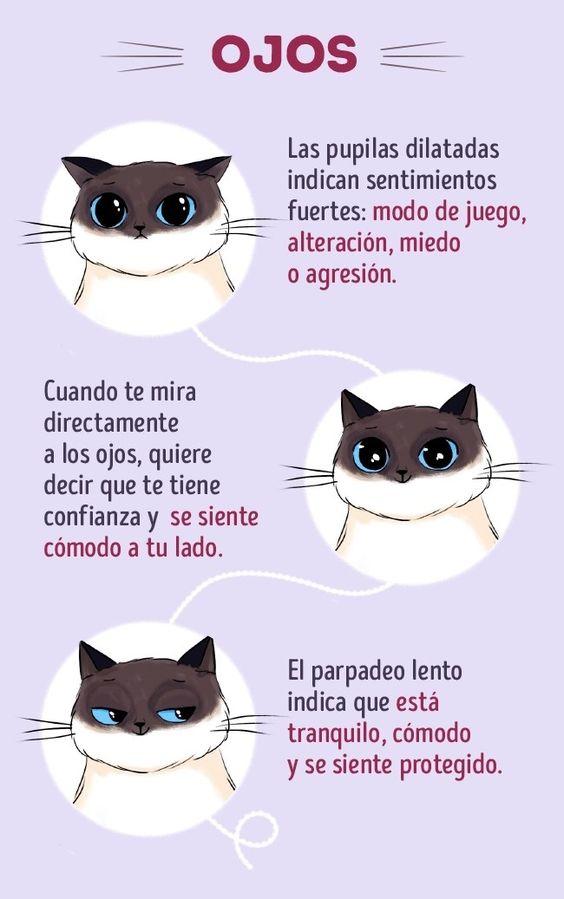 Todos sabemos que los gatos son las mascotas más ilógicas e impredecibles. Quién sabe qué estará sucediendo en la mente de esos peludos. Sin embargo, los gatos tienen su lenguaje, y si lo aprendes podrás ententender mejor a tu...