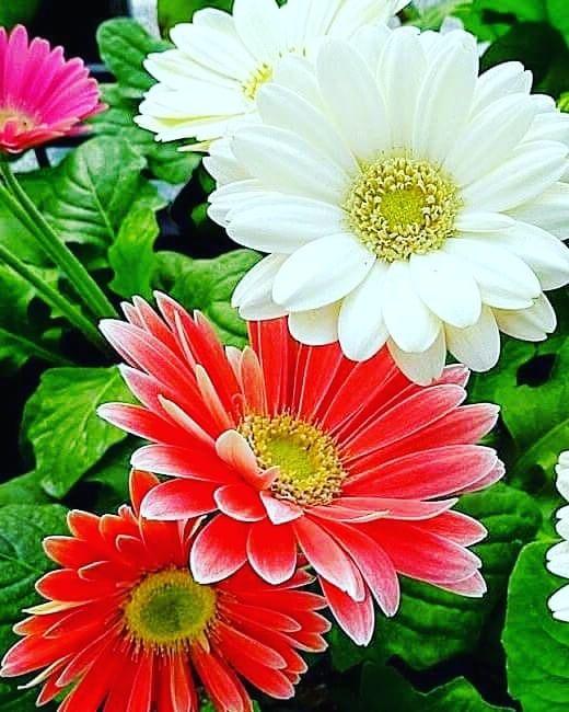 Flores Beautiful Flowers Beautiful Flowers Wallpapers Flower Garden