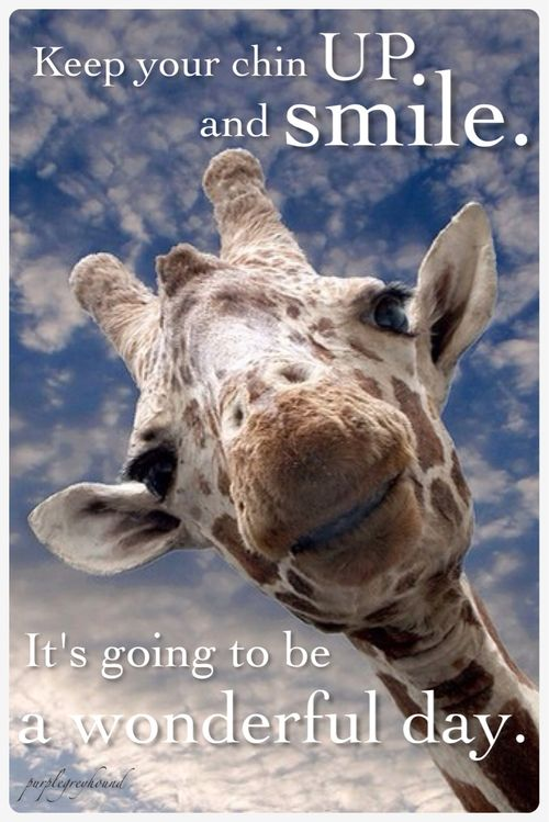 Inspirational giraffe just wants you to be happy.: