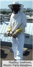 rooftop beehives