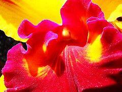 Orquidea  photo (c) By PauloPaz