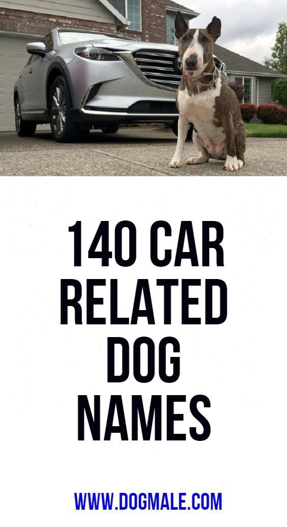 140 Car Related Dog Names Dog Names Puppy Names Dogs