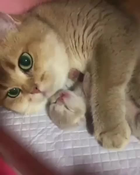 Beautiful Family Cute Baby Cats Baby Cats Cats Kittens