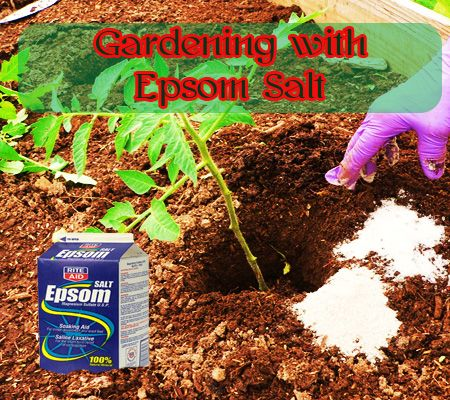 Gardening With Epsom Salt Composed Almost Exclusively Of