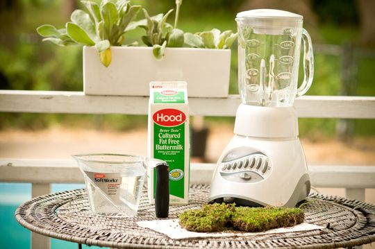 Grow your own moss!