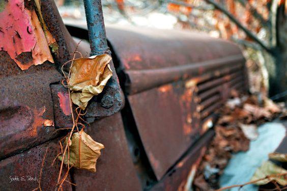 Leaving Tracks Unframed Fine Art Photographic by ScottEPondDesigns