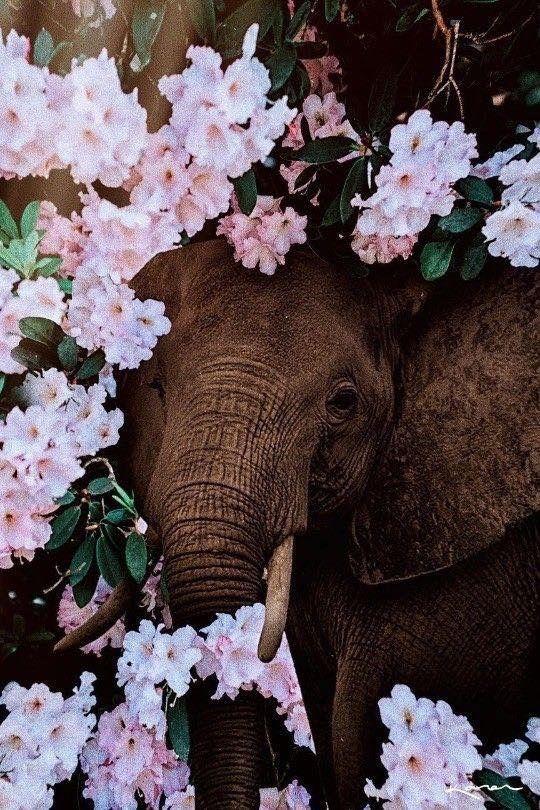 Elephant Amongst The Blooms Cute Animals Animals Wild Animals
