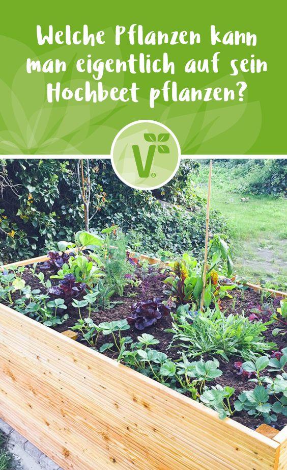 Volmary Pflanzen Online Kaufen Im Volmary Online Shop In 2020 Hochbeet Pflanzen Pflanzen Hochbeet