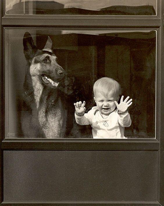 foto-bebe-y-pastor-aleman:
