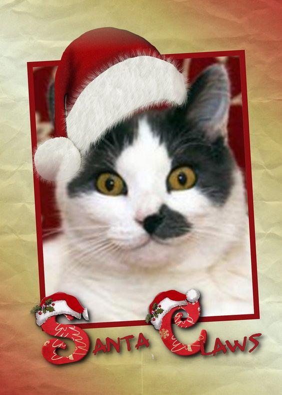 Santa Claws  is Oh So Cute