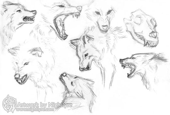 wolves teeth art - Google Search | Why Are Wolves Depicted The Way ...