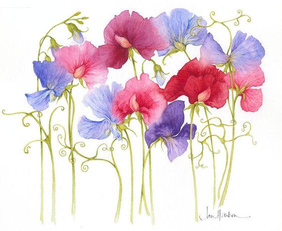 Sweet Peas for Gran    [Flores Ilustraciones en PNG para Artesanía y Diseños Primavera]
