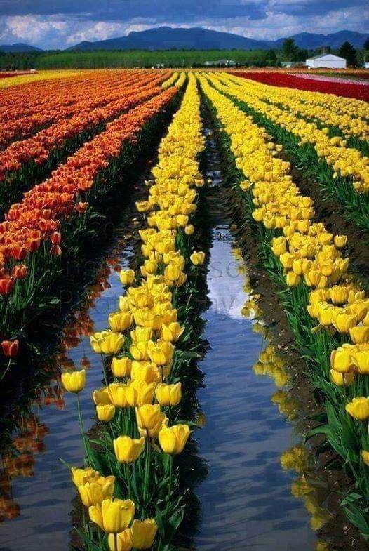 Pin De Lourdes Ross Em Only Roses Belos Jardins Lindas Paisagens Jardins Famosos