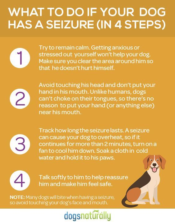 Seizures In Dogs Natural Options That Work Dogs Naturally In 2020 Dog Seizures Epilepsy In Dogs Seizures