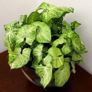 20 Super Easy Houseplants You Ll Love Green Leaves 640 x 480