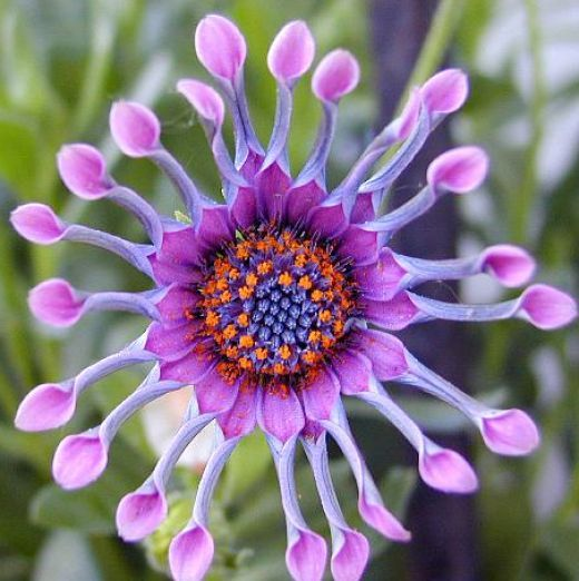 Rare flowers flower and world pictures on pinterest for What is the most beautiful flower on earth