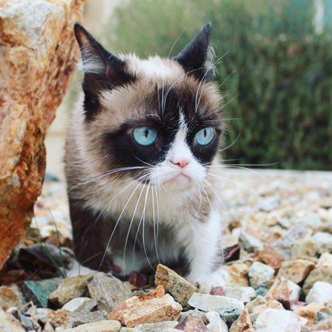 very beautiful Grumpy Cat