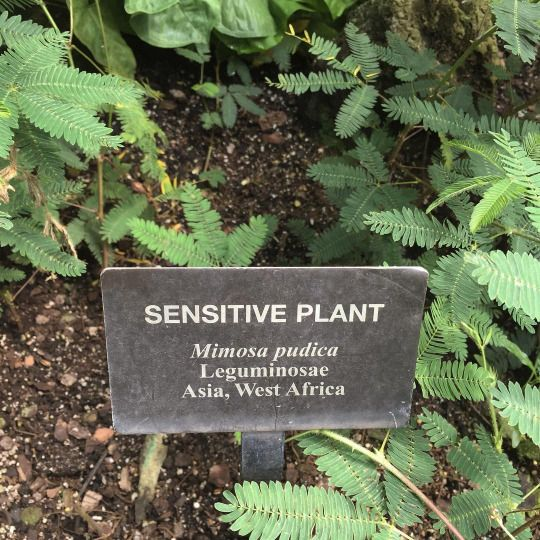 sensitiveplant