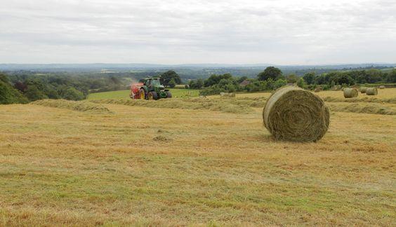https://flic.kr/p/JUSe6C   Summer Harvest   West Sussex farming in the fields on the weald www.adamswaine.co.uk