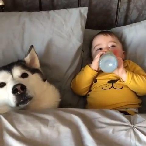 Wait Till The End Wait Hund Witze Susse Tiere