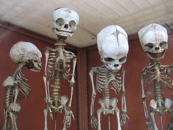Natural History Museum Paris infants