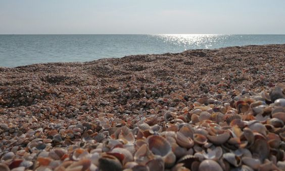 Sea Shell Beaches: At places like Shell Beach in Australia or Saint Barthelemy, Jeffreys Bay in South Africa, and Sanibel Island in Florida, the coastline is pure shells. The main reason of abundance of shells near these areas can be lack of predators leading to huge populations of shelled sea-creatures, thus forming a unique geographic positioning that allows shells from the wide ocean.