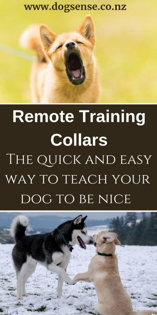 Electric Dog Collars Nz Busting The Myths You May Just Be