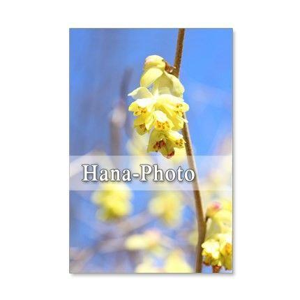 5枚セットのポストカードです。青空が似合う花たち。青空の下では、一層きれいに、美しく、キュートに見えます。春の木の花たちと青空の競演です。157-1)個性的な...|ハンドメイド、手作り、手仕事品の通販・販売・購入ならCreema。
