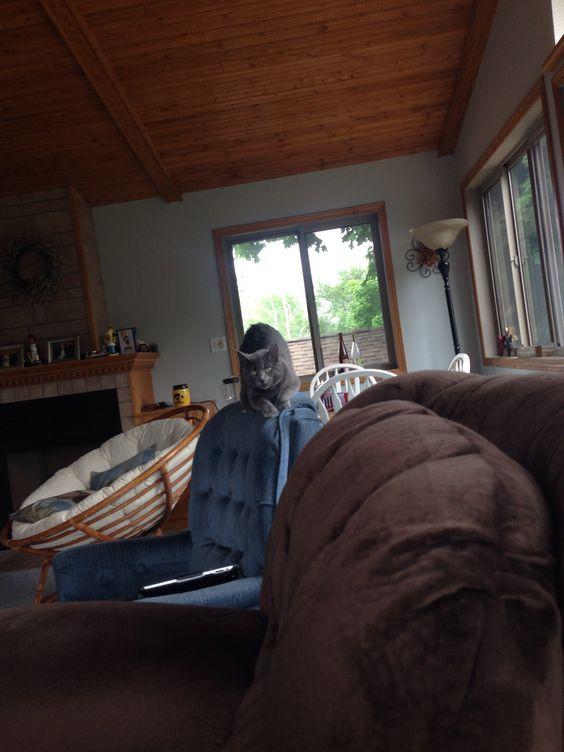 He's STILL in my chair.